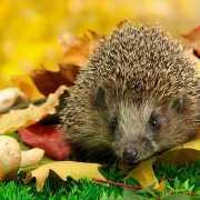 4 pics 1 word nails runner climb porcupine 4 pics 1 word answers nails runner climb porcupine expocarfo Images