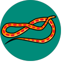 Word Camp Cornsnake answers